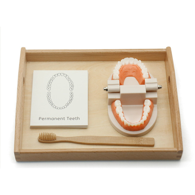 Montessori Set of Simulated Tooth Brushing