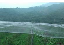 5m Orchard Bird-proof Net Horticultural Net White nylon Net Strawberry Grape Protection Net рассел джонс а программирование asp net средствами vb net