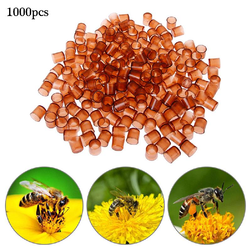 1000 PCS Bee Queen Rearing King New Plastic Brown Color Cells Cages Room Cups Cell Cage Cup Bees Tools Beekeepers Equipment