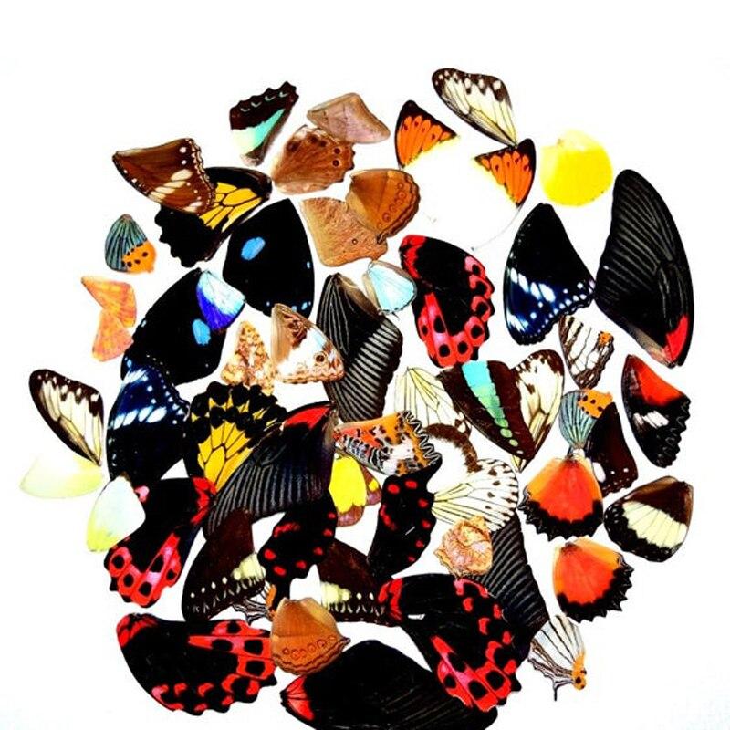 2pcs Real Butterfly Wings,3D Butterfly Specimens Wings,Real Dried Moth Butterflies Wings For Ring/necklace/framed Butterflies