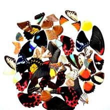 2pcs real butterfly wings,3D Butterfly specimens wings,Real Dried Moth butterflies wings for ring/necklace/framed butterflies butterfly wings виброкольцо для пениса 5781180000