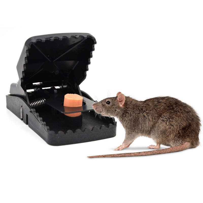 1/3/5Pcs Reusable Powerful Rodent Killer Mouse Trap Mole Repeller Mice Rat Trap Control Mousetrap Bait Pest Catching