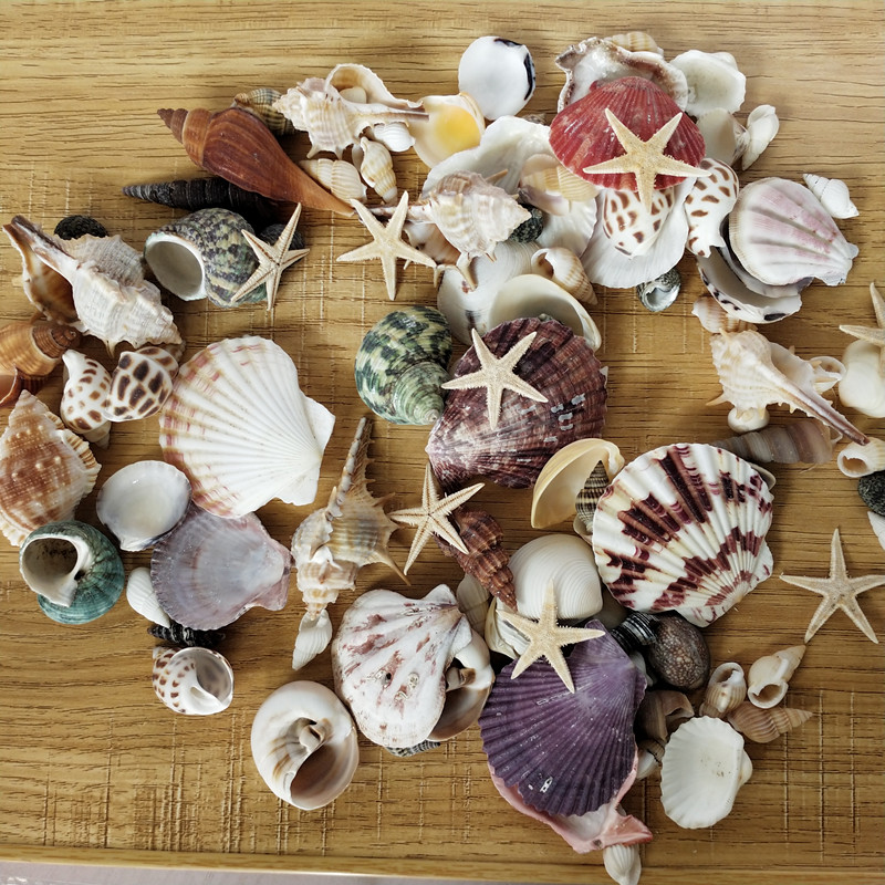 100PCS Mixed Ocean Sea shells Wedding Decor Beach Theme Party, Seashells Home Decorations, Fish Tank, sea star 4