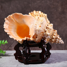 natural sea shells white frog screw aquarium landscape Gift Family home decoration Fish tank Marine theme Party Decor DIY Crafts