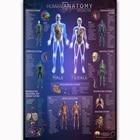 MT771 Human Anatomy ...