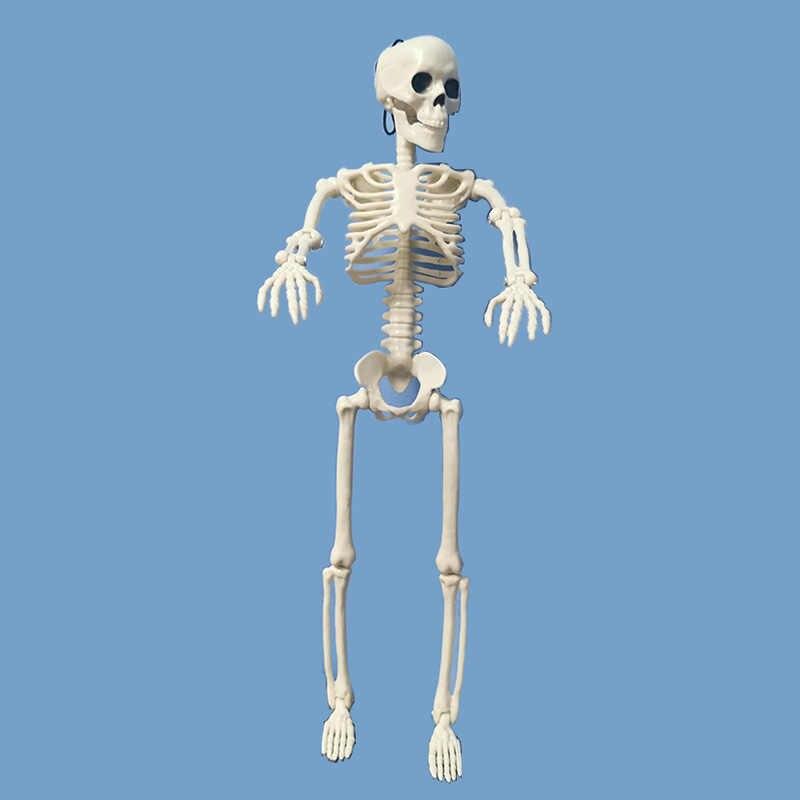 Attivo Modello di scheletro Umano Anatomia Scheletro Scheletro Modello Medico di Apprendimento Decorazione Del Partito di Halloween Scheletro Art Schizzo