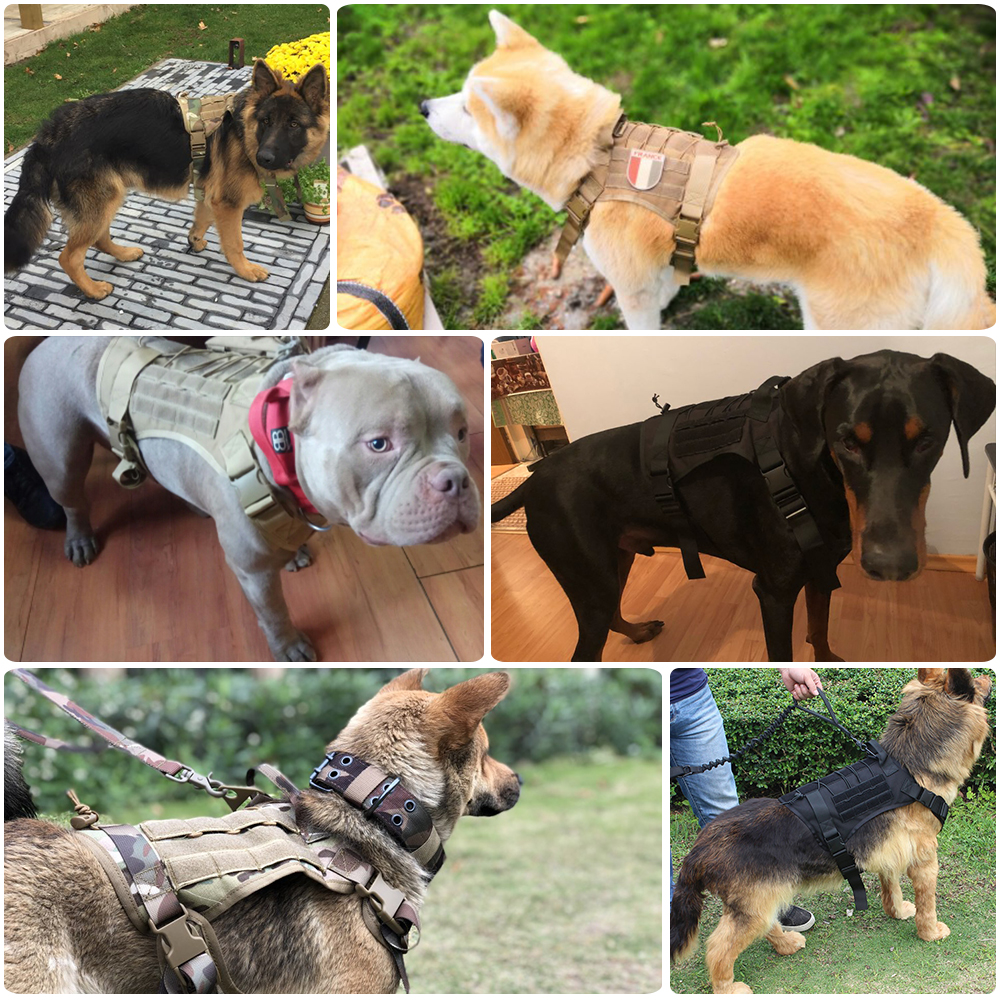 Mammal - Military Tactical Dog Harness German Shepherd Pet Dog Vest Harness For Small Large Dogs