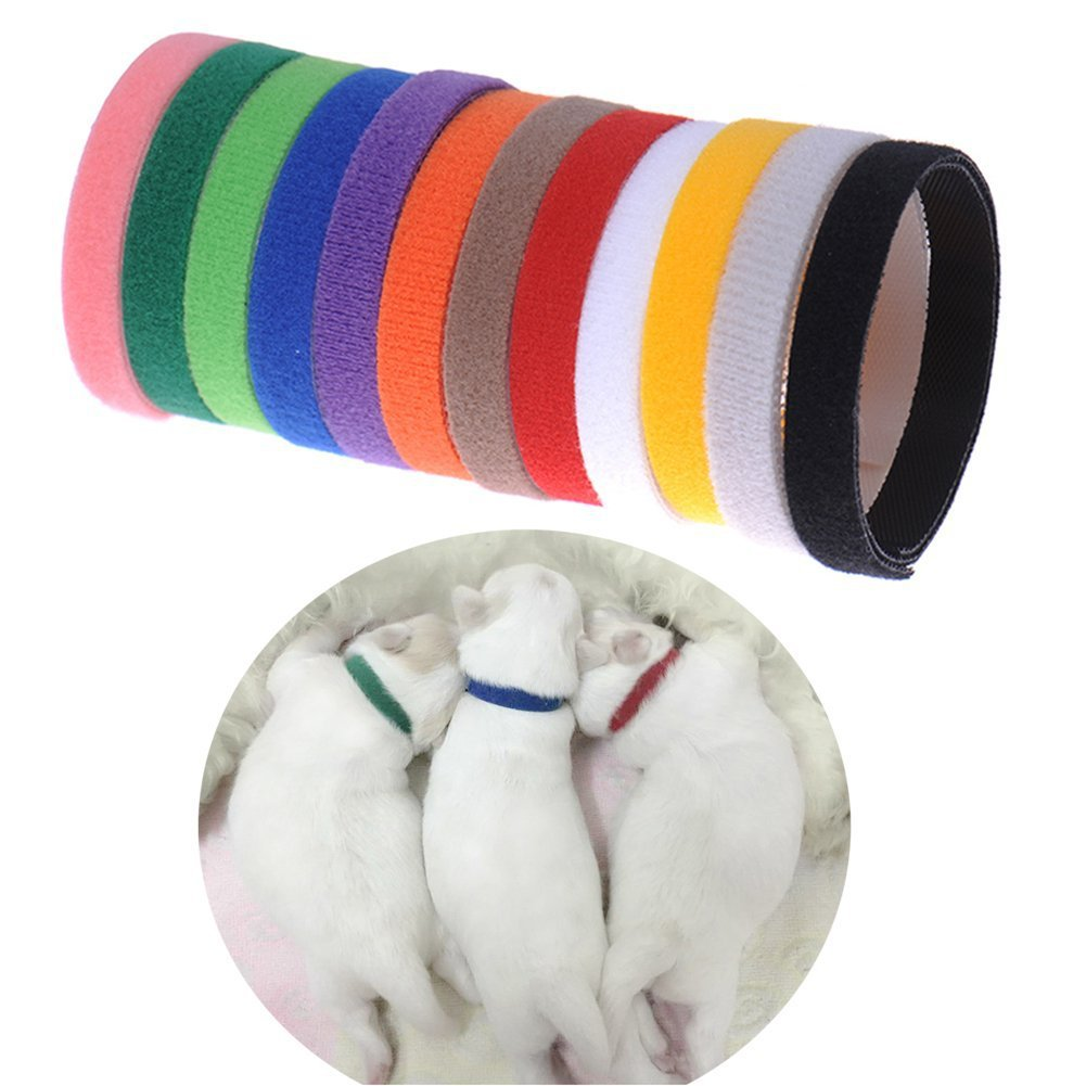 Service Dog Velcro Hot Selling Network Pet Collar Puppy Identity Identification Neck Ring 12 Color Circle Explosion