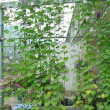 Garden Green Nylon Trellis Netting Mesh Melons Support Climbing Bean Plant Nets Grow
