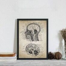 Cuadro Modular nórdico Vintage cabeza humana y cerebro anatomía lienzo pared arte impresiones cartel neuro pintura de la Oficina de los médicos
