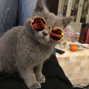 1 шт., милые очки для кошек, очки для собак, товары для домашних животных, кошачья игрушка, собака, солнцезащитные очки, фотографии, 3 см, аксессуары для домашних животных, круглые, цветные