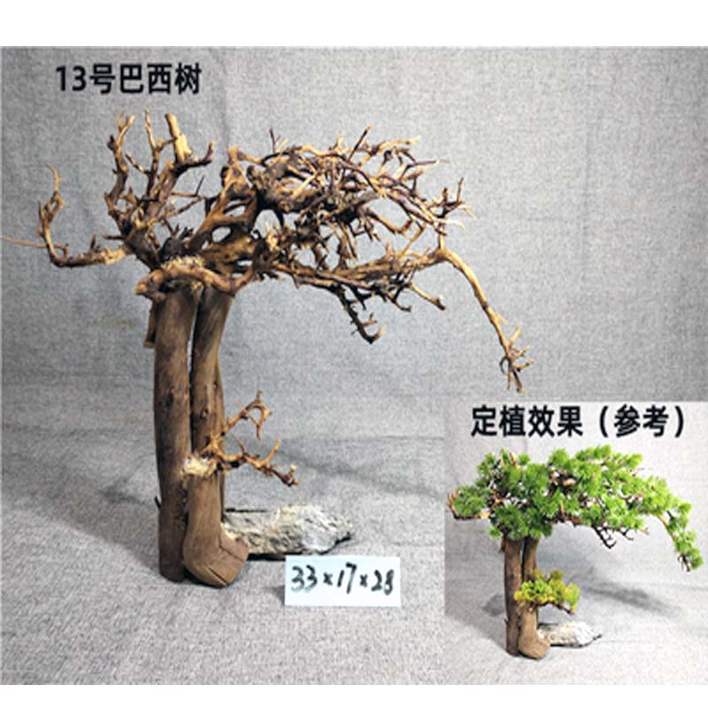 Brazilian Tree Moss Cuckoo Root Thailand Branch  Aquarium Bonsai Driftwood Moss Tree