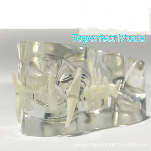Image 2 - 解剖ネコ病理顎モデル医療猫口と歯解剖クリアネコ esqueleto anatomia