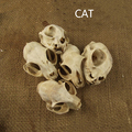 Aqumotic кошачьи кости декор 1 шт. животное кошка череп настоящая кость здоровье зубы натуральный сушеный хороший привидениями украшение дома