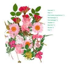 Pressionado flor misturada flores secas diy arte decorações florais coleção presente artesanato diy bom666