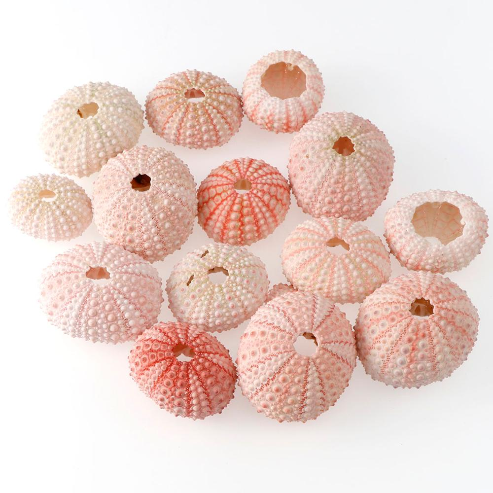 2/4/6Pcs 3.5-5 CM Natural Small Pink Sea Urchin Shell Natural Shell Conch Beach Wedding Decoration Coastal Home Decoration