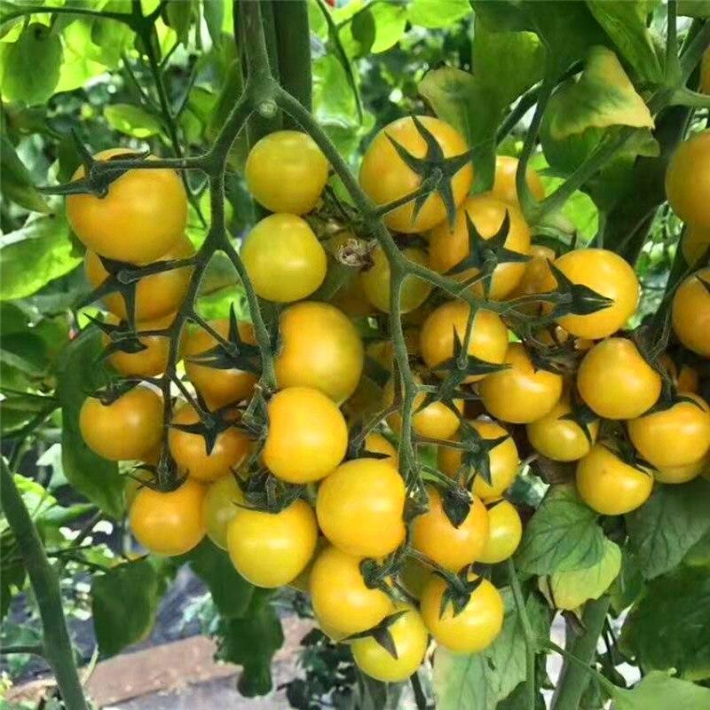 Мочевина 46% с лучшей ценой сельского хозяйства мочевина 46% азотное удобрение Просверленный 250 г мешок рыночную цену