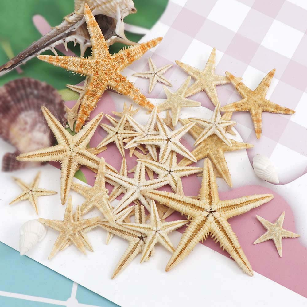 1 Box 1-5cm Natural Starfish Seashell Beach Craft Natural Sea Stars DIY Beach Wedding Decoration Crafts Home Decor Epoxy
