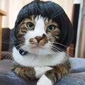 [MPK парик для кота s] желтая и синяя искусственная кожа, парик для домашних животных, Забавный костюм кошки