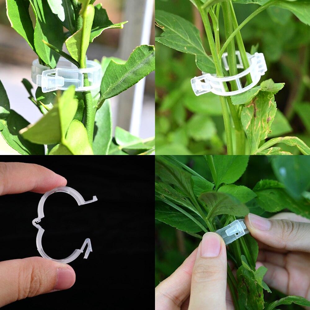 50/100pcs Reusable Plastic Plant Support Clips Plants Hanging Vine Clip Garden Greenhouse Fork Vegetable Tomatoes Clips Supplies 4