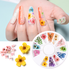 12 Colors Dried Flower for Nail Art Decorations Natural Real