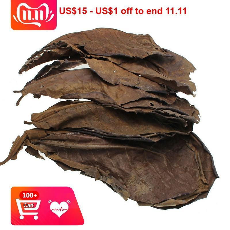 10 pçs de alta qualidade natural terminalia catappa folhas, indiano amêndoa lour árvore folha de oliveira para aquário água para equilibrar a acidez ph