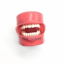 Masque dentaire en Silicone, modèle dapprentissage pour étudiant, avec 28 pièces et dents fixes