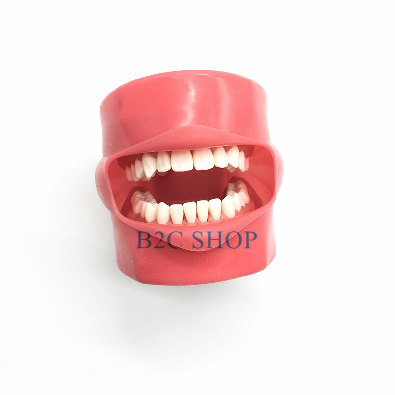Student Learning Model Dental Phantom Head Model Silicone Mask With 28 Pieces Screw Fixed Teeth