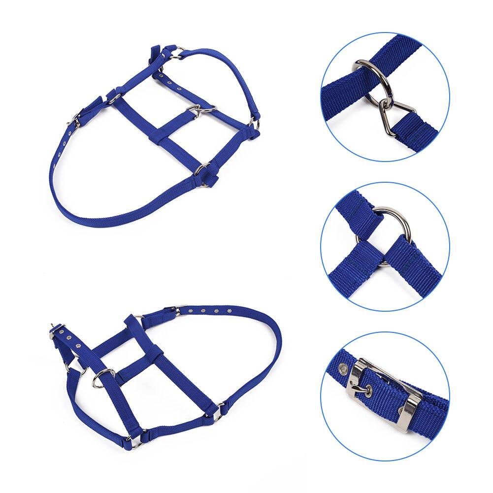 Horse Riding Belt Bridle Adjustable Halter Headstall Horsing Accessory Red/Blue