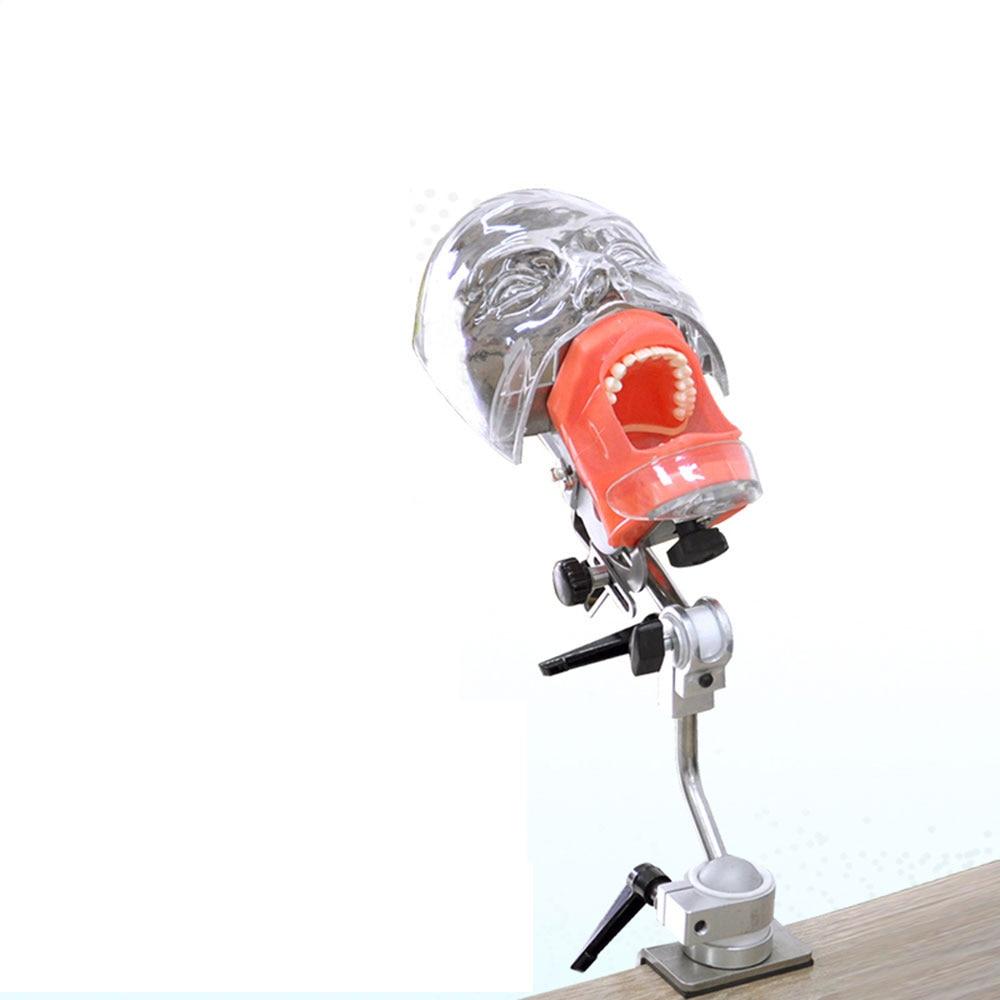 Head Model Dental Simulator Nissin Manikin Phantom Head Model With New Style Bench Mount For Dentist Teaching