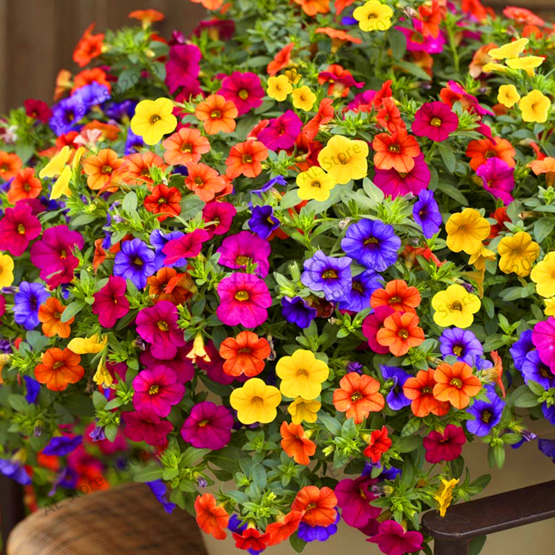 Best-Selling!200pcs Hanging Petunia Mixed Flores Color Waves Beautiful Flowers For Garden Plant Bonsai Flower Plantas
