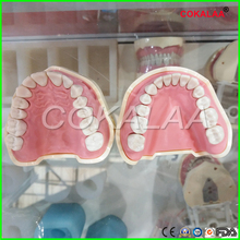 Dental Soft Gum Teeth Model Removable 28pc or 32pc can be select NISSIN 200 KAVO head model Compatible