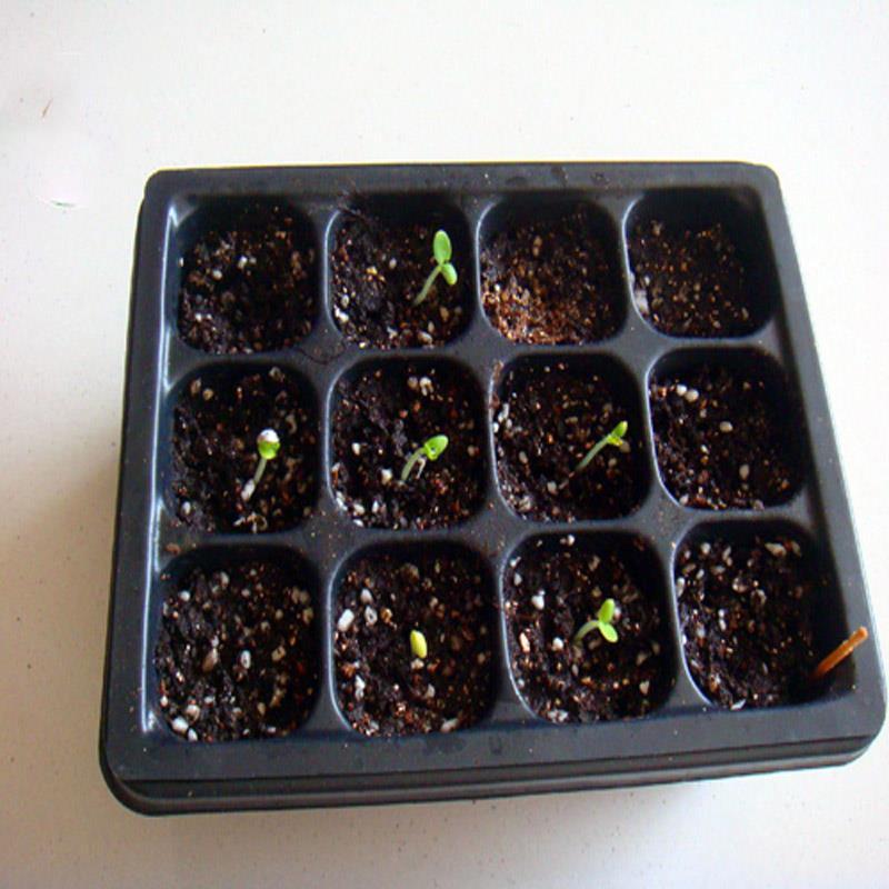 Acrylic Storage Box Box Lightbox Seeds Hole Case* Plant 12 Cells