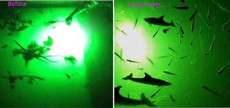 12v luz de pesca 504leds para pesca