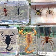 1piece Scorpion Specimen Water Spider In Clear Resin Educational Explore Instrument School Teaching Supplies 44x29x18MM