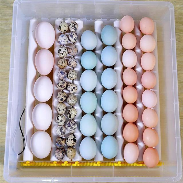 Инкубатор для яиц с 24 слотами, полностью автоматический инкубационный чехол, инкубатор для курицы утки, контейнер для размножения с вилкой ...