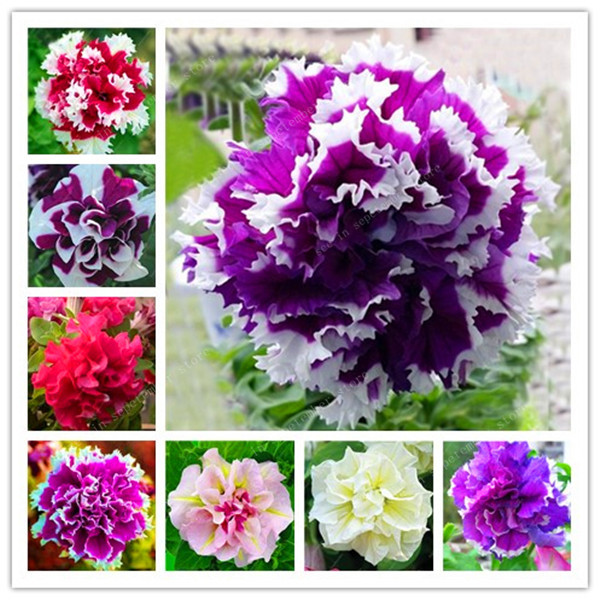 100 Pcs Artificial Petunia