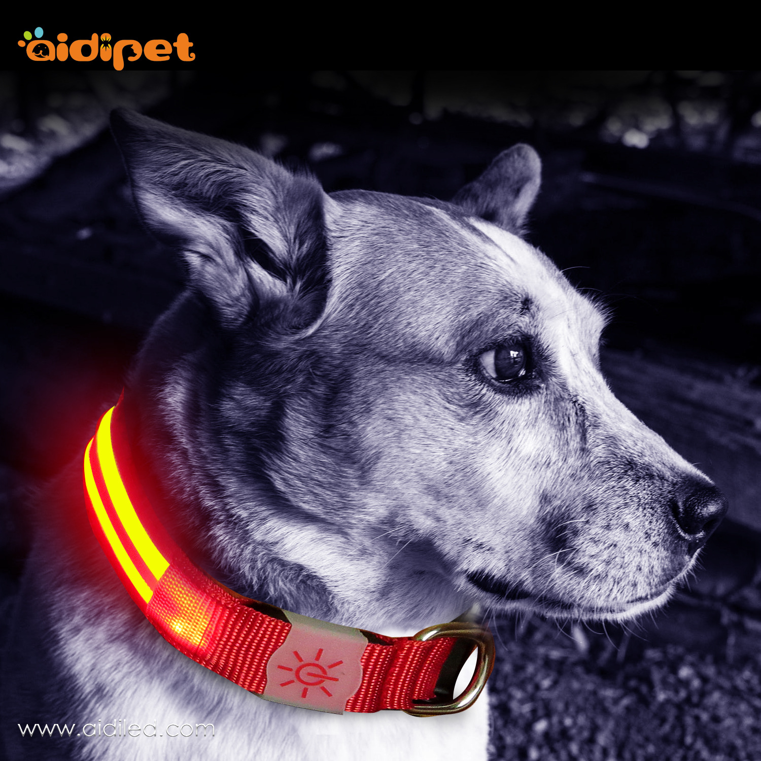 USB Charging Neck Ring Double-Sided Exposure LED Large And Medium Small Dogs With Fiber Dog Traction Rope Luminous Collar Glowin