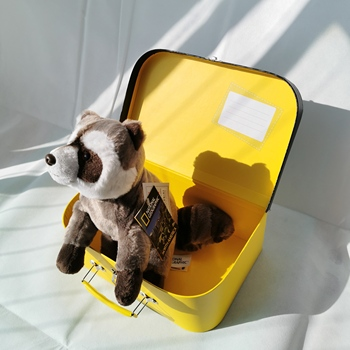 National Geographic Raccoon Plush Toy Kawaii Raccoon Stuffed Animals Doll with NG Box Surprise Gifts For Children
