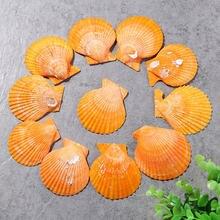 10 шт/лот натуральная желтая Большая Морская раковина в средиземноморском