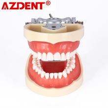 Dental Typodont Teeth Model With Removable Teeth Teaching Tooth Model 8012
