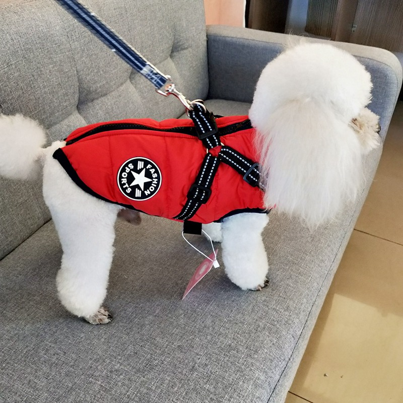 Cotton Dog Jacket in Large Tooth Zipper Design with Harness and Adjustable Chest Strap 1