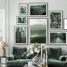 Свежий лес Пейзаж Плакат дерево зеленый лист простая Гора туман