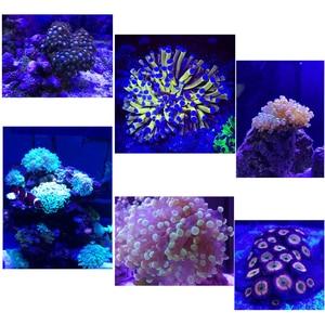 Image 2 - Aquarium lampe led für aquarium led beleuchtung korallen riff licht salzwasser aquarium lichter led aquarium