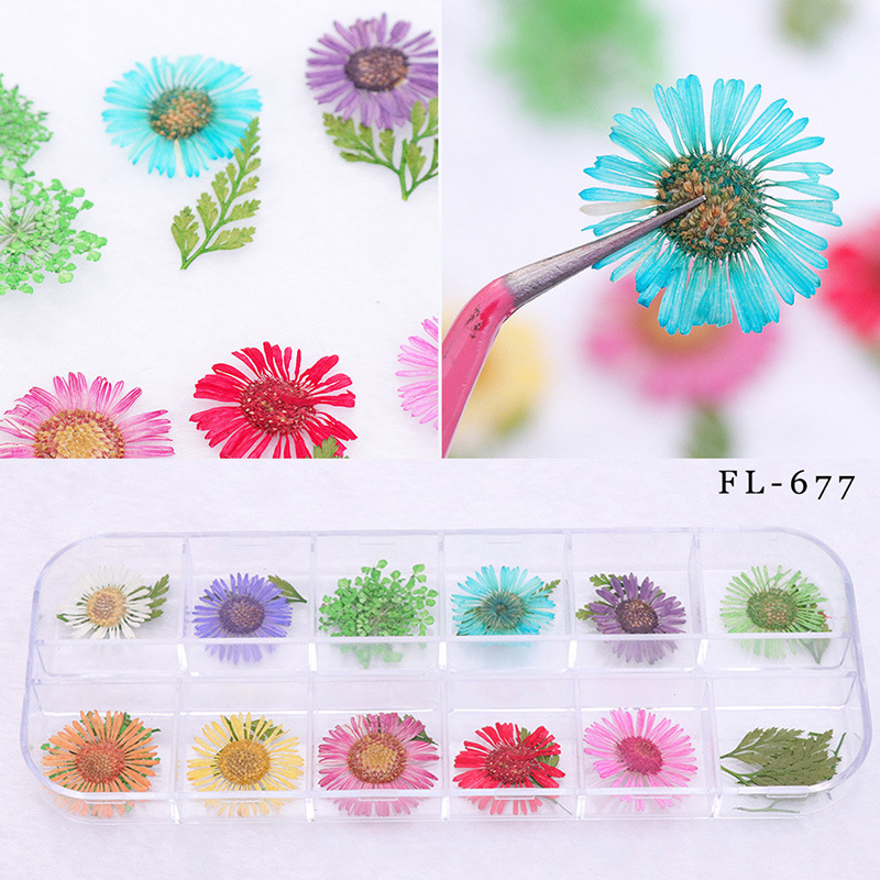 Wholesale Nail Ornament Small Dried Petals Large Leaves Flower Natural Real Flowers 12-Color 3D Nail Polish Glue Phototherapy Fl