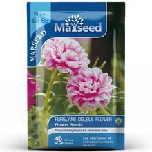 American Heirloom MARSEED Purslane Double Flower  Seedsplants Seedling Garden Outdoor
