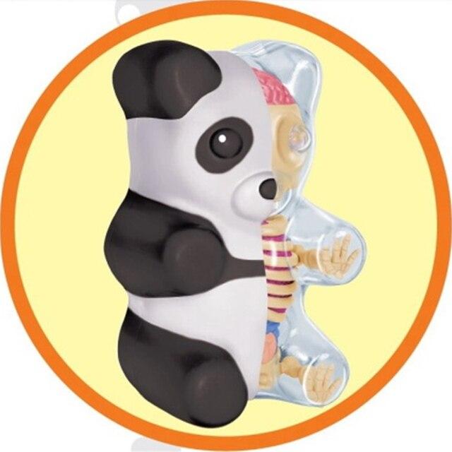 4D authentique artiste puissant Jaxx petit ours gommeux anatomie Panda