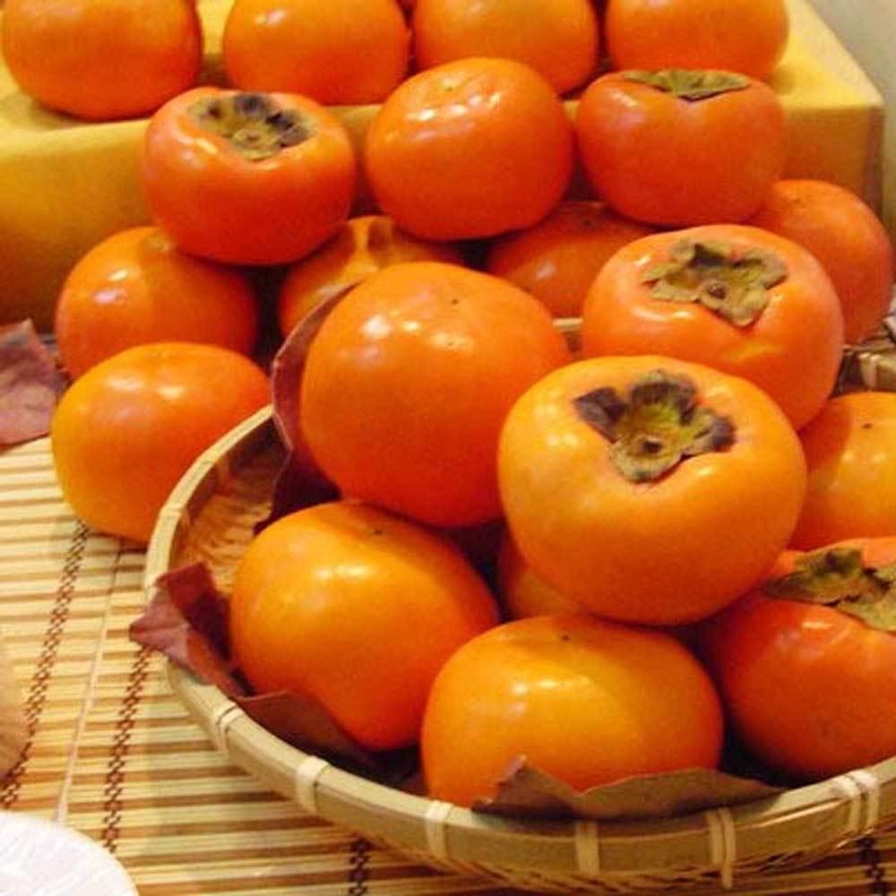 Japanese Persimmon Fruit Tree  - Diospyros Kaki 30pcs