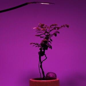 Image 5 - COB שבב LED לגדול אור פיטו מנורת AC 220V 20W 30W 50W ספקטרום מלא לא צריך נהג לצמיחה פרח שתיל לגדול צמח
