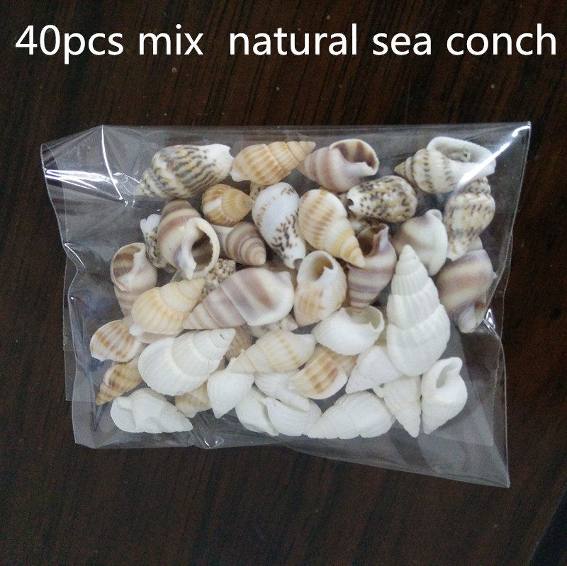 40pcs Beautiful Beach Mixed Sea Shell Real Sea Shell Mix Sea Shell Starfishes Shells Craft SeaShell Aquarium Decal Decor Crafts